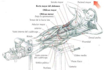 flexión-lateral-tronco-en-banco