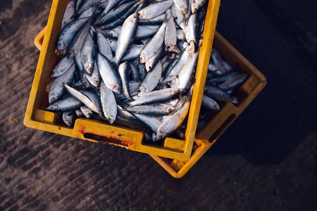 pesca-omega3