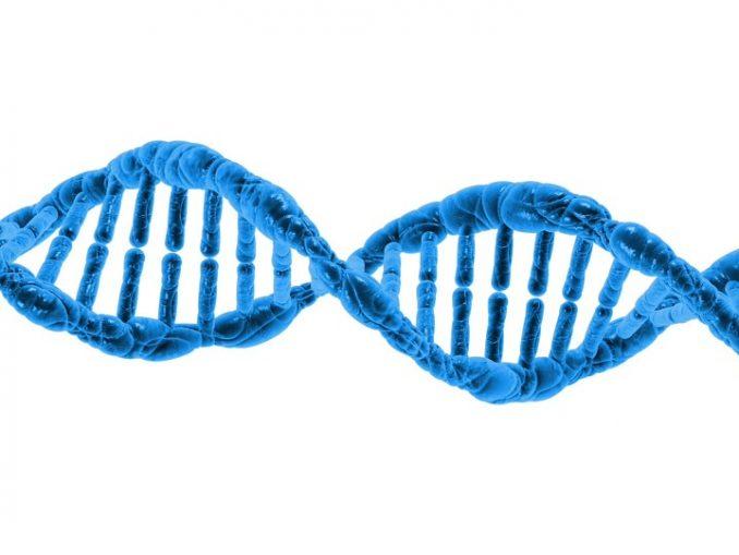 ¿Por que los aminoacidos son fundamentales?