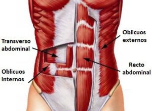 musculos-abdominales-para-ejercicios-abdominales