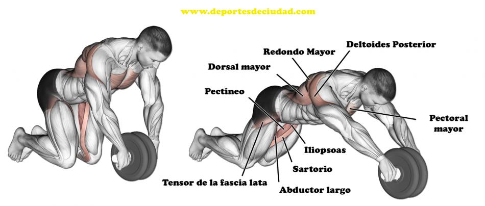 musculos-rueda-abdominales