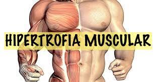 Hipertrofia muscular miofibrilar: principio y funcionamiento
