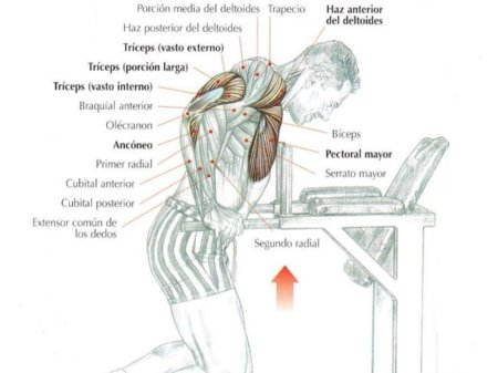 musculos-fondos-triceps