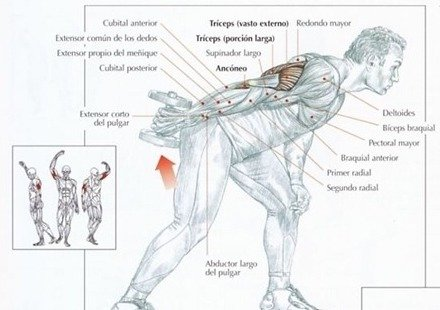 patada-triceps-musculos