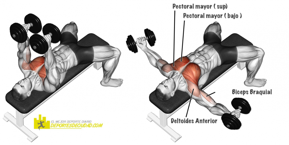 musculos-aperturas-mancuernas