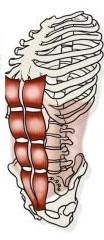 recto-abdomen