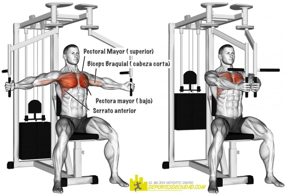 musculos ejercitados con las aperturas de pecho en maquina