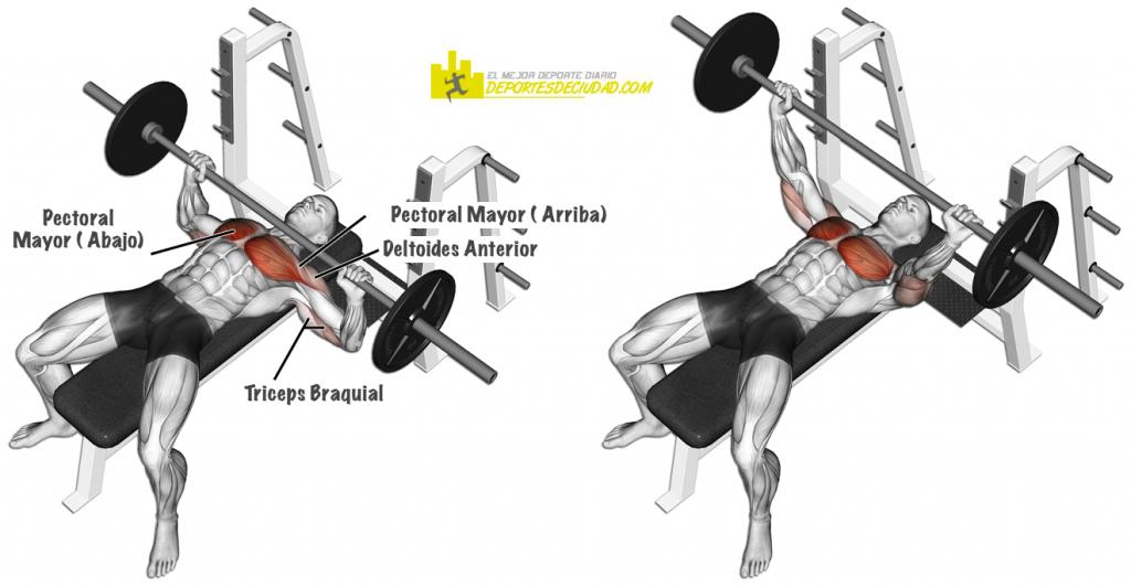 musculos-press-banca