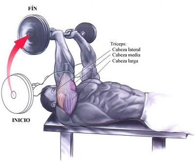 musculos-press-frances