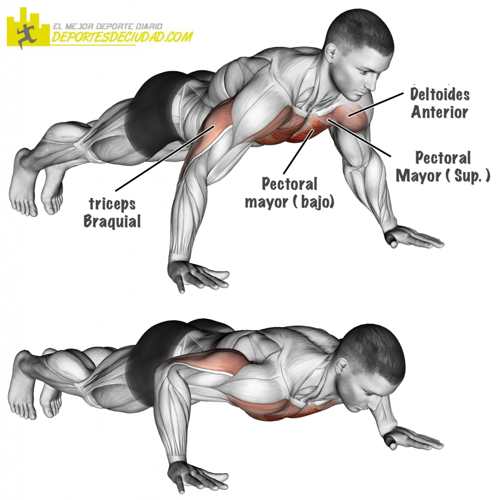 musculos-push-ups