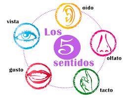 5-sentidos
