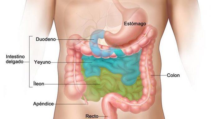 organos-cuerpo