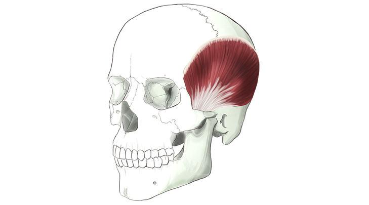 musculo-temporal