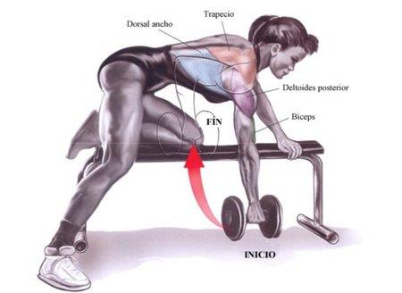 musculos-remo-con-mancuerna