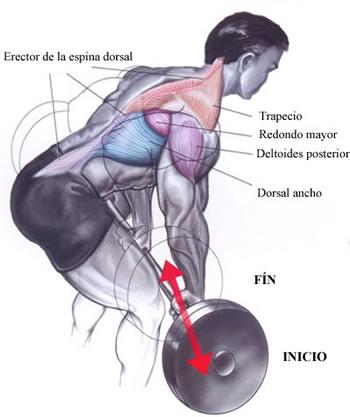 musculos-trabajados-remo-con-barra
