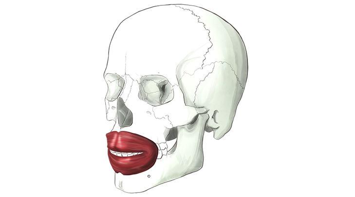 orbicular-de-los-labios