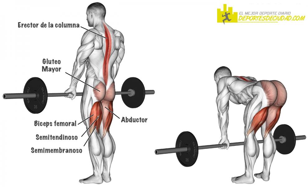 PESO-MUERTO-con-barra-musculos