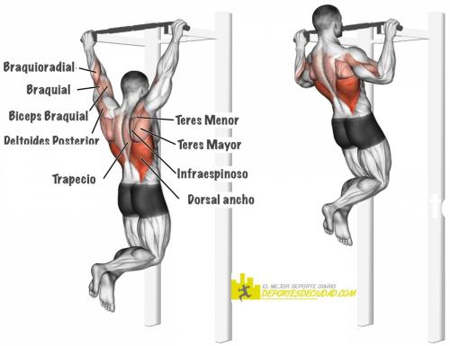 musculos-dominadas