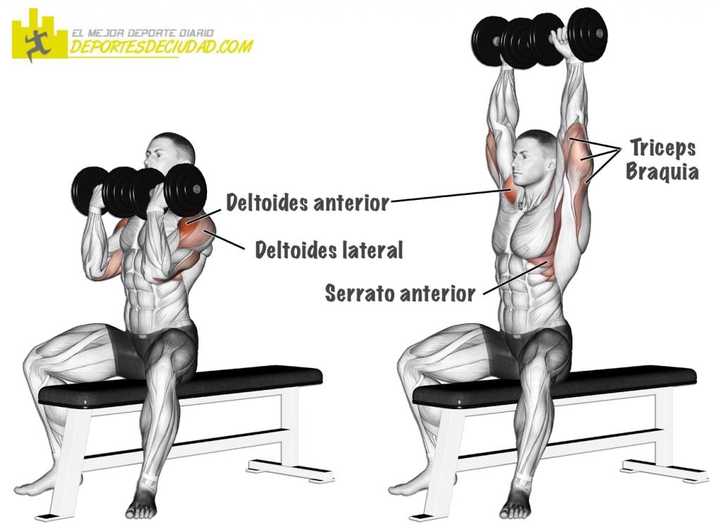 musculos-press-arnold
