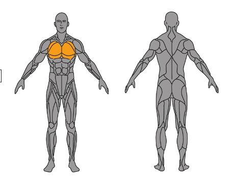 musculatura-del-pecho