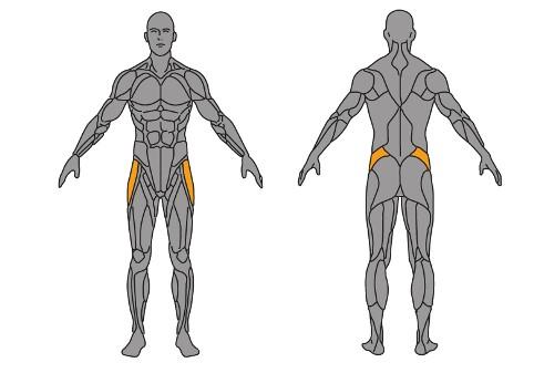 musculos-piramidales-diagrama