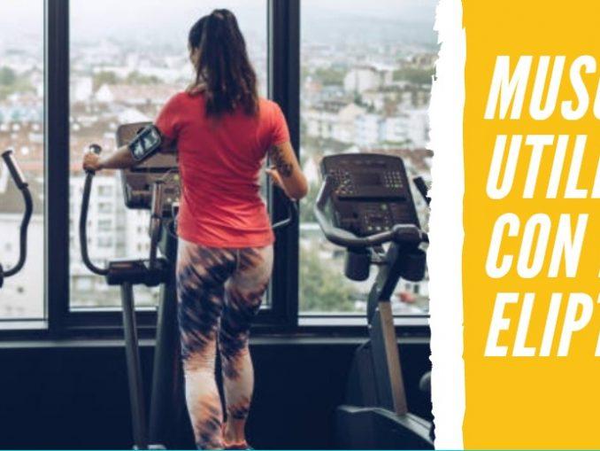 Músculos que Utilizamos cuando hacemos Elíptica
