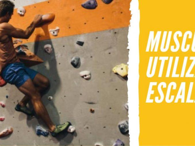 Músculos que utilizamos para Escalar