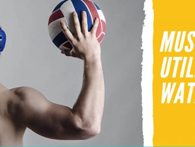 Músculos que Utilizamos en el Waterpolo