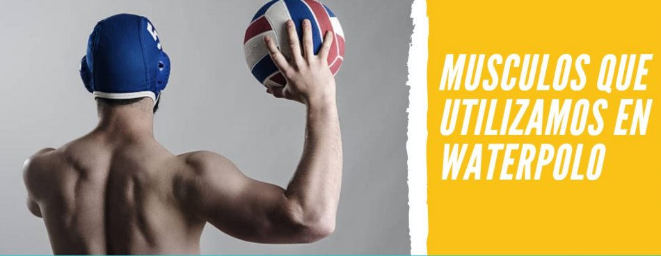 musculos waterpolo
