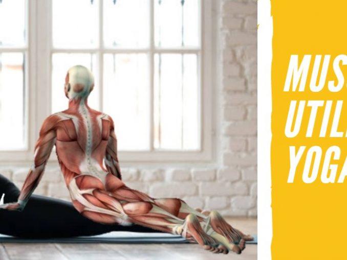 Músculos que Utilizamos en el Yoga
