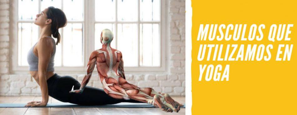 musculos yoga