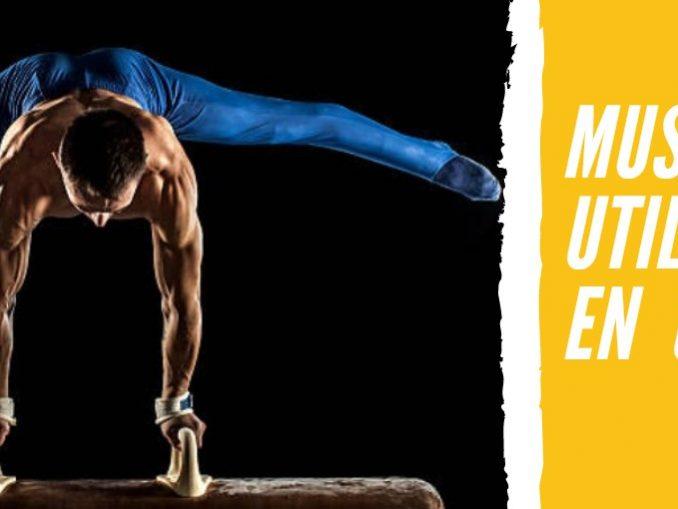 Músculos que Utilizamos en la Gimnasia