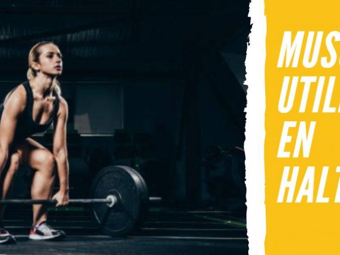 Músculos que Utilizamos en Halterofilia