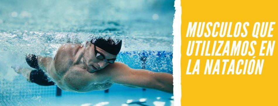 musculos-natación
