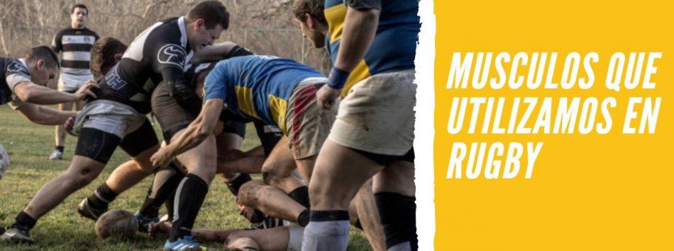 Músculos que Utilizamos en el Rugby